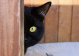 Black cat with yellow eyes peeking out from the corner