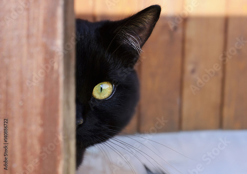 Aluminium Panter Black cat with yellow eyes peeking out from the corner