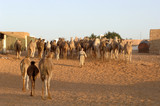 Mauritania adventure