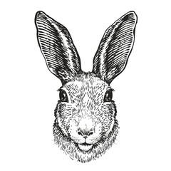 Hand-drawn portrait of rabbit. Easter bunny, sketch. Vector illustration