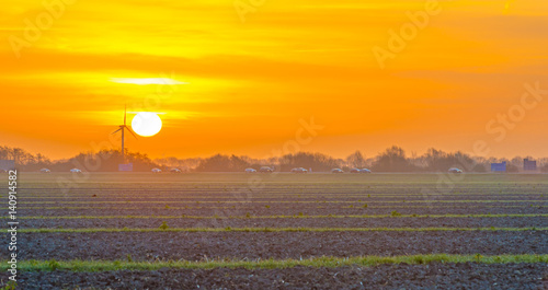 Field with vegetables at sunrise in spring