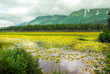 Scenic view on Kenai Alaska of mountains and lake with water lilies