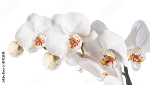 White orchid isolated - 140922358