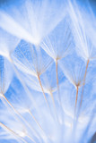 Abstract macro photo of plant seeds at a morning - 140935147