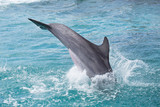 Delfin mit Kopfsprung ins Meer