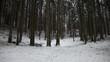 Snowy winter season forest tree landscape. Dolly slider equipment used.