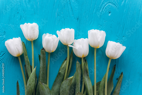 mother's day, white tulips on bluewooden background