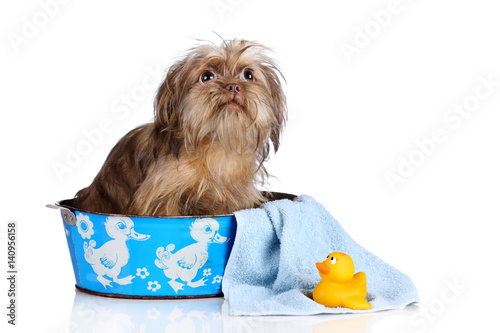 Poster Funny shaggy dog in the bath