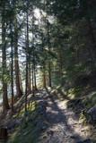 Nadelwaldweg