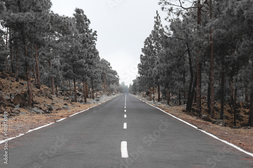 Poster  empty road through forest landscape