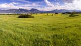 Panorama Landschaft mit Frühlingswiese und Forggensee im Allgäu