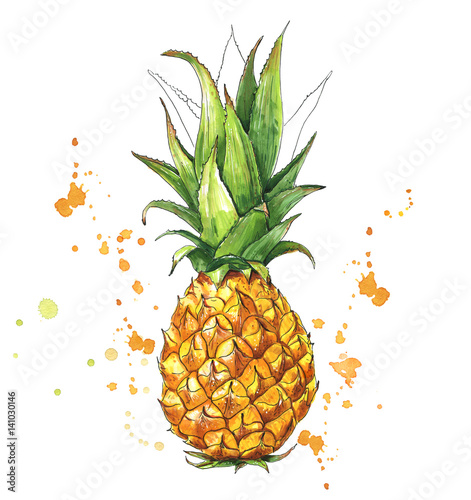 Juicy pineapple with splashes. Hand drawn illustration of tropical fruit. Watercolor - 141030146