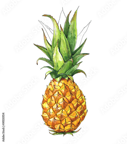 Pineapple, Tropical Fruit, Food. Watercolor illustration, Hand drawn - 141030154