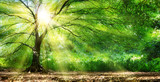 Tree With Sunshine In Wild Forest