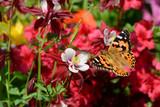 Schmetterling 295