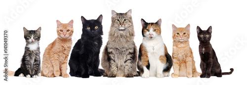 Grupa kotów różnych ras siedzi w surowym w białym tle