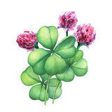 Green four leaf clover with pink flowers. Hand drawn watercolor painting on white background. - 141051550
