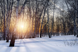 The setting evening sun in the winter grove