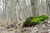 fresh moss in nature