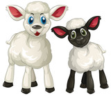 Two little lambs on white background