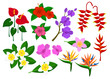 Tropical exotic flowers set with frangipani, bird of paradise, anthurium, orchid, hibiskus, heliconia