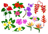 Tropical exotic flowers set with frangipani, bird of paradise, anthurium, orchid, hibiskus, heliconia
