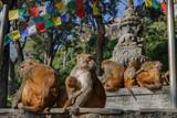 Monkey family in Swayambhunath temple