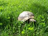 Tortoise in the garden