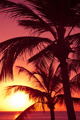 Colorful sunset and silhouetted tropical palm trees
