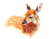Fototapety Watercolor Baby Deer Hand Painted Fawn Illustration isolated on white background