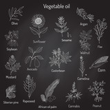 Vector collection of different oil plants