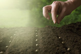 Spring planting plants - 141191713