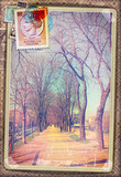Avenue with trees,vintage postcard and old stamps