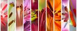 Set of macro stamens of blooming lilies - 141212560