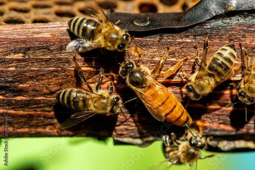 Aluminium Bee The queen bee swarm - selective focus