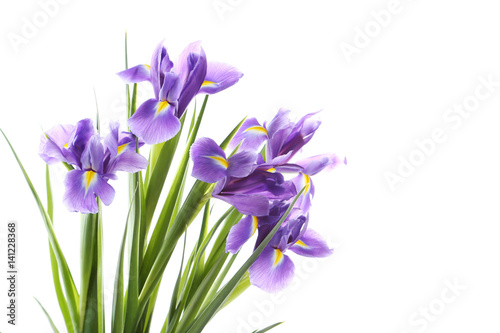 Bouquet of iris flowers isolated on a white