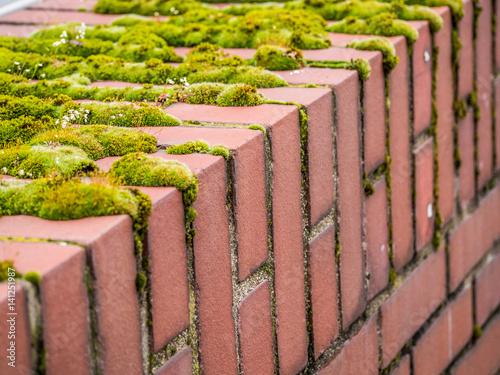 Tuinposter Baksteen muur Moos auf Mauer