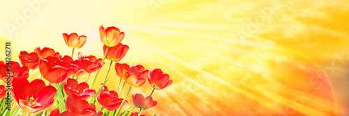 Poster Zwavel geel Red Tulips, Yellow Sky