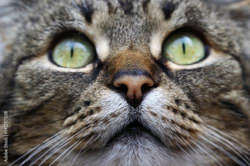 Zbliżenie twarzy kota