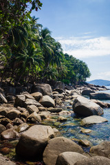 The beach with rocks and palms. The beach with the different palm trees and big stones. Vertical outdoors shot.