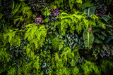 Green Plant Wall - 141305976