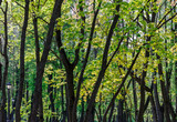 green trees foliage background in spring forest