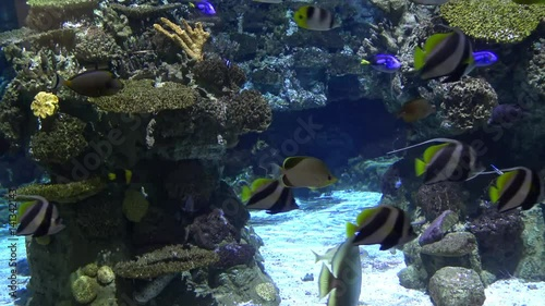 Barcelona Aquarium with many fishes