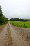 Summer landscape with green fields