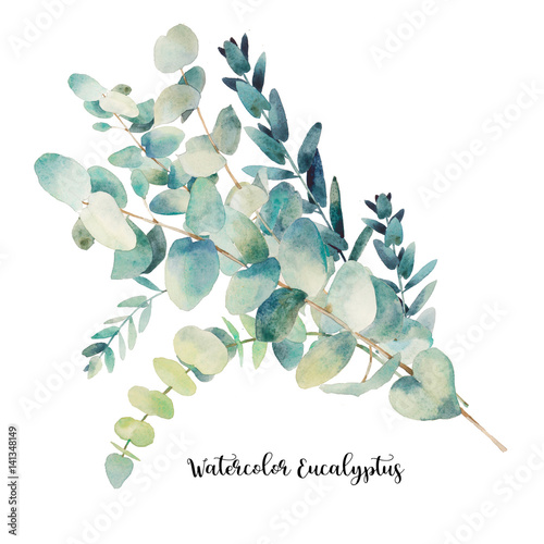 Watercolor eucalyptus bouquet. Hand painted floral illustration with object isolated on white background.