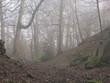 Autumnal misty october dawn series