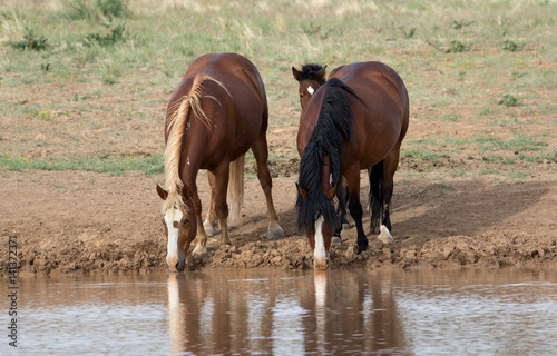 Poster Wild Horses at Watering Hole