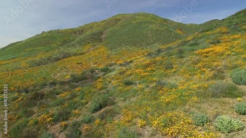 California Poppy Super Bloom Aerial 17 Wild Flowers Lake Elsinore