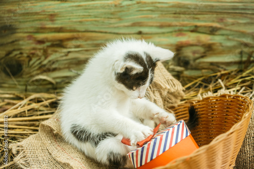 Poster Cute small cat playing with gift box