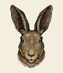 Easter bunny. Portrait of hare, sketch. Vintage vector illustration